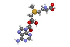 s adenosil metionina